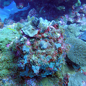 Coral Reefs Thumbnail