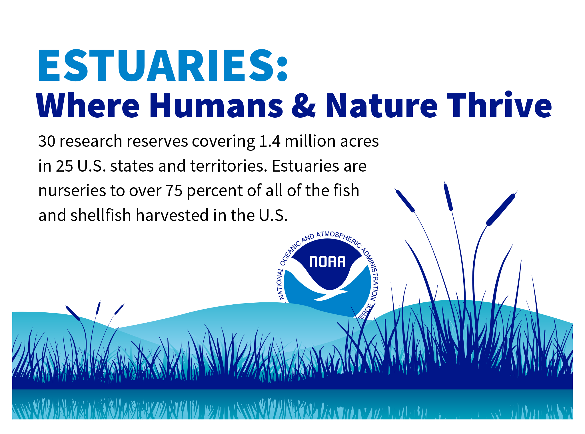 Estuaries: Where Humans & Nature Thrive. 29 research reserves covering 1.3 million acres in 24 U.S. states and territories, contributing over 75 percent of all of the country's fish and shellfish!