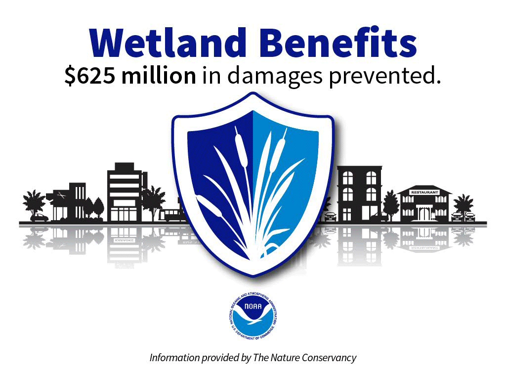 Wetland benefits graphic stating that $625 million in damages are prevented