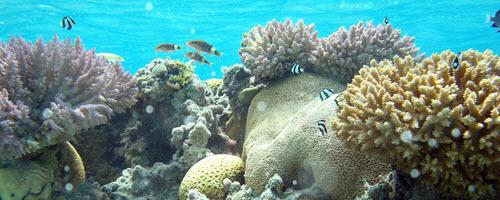 Coral Economics thumbnail image