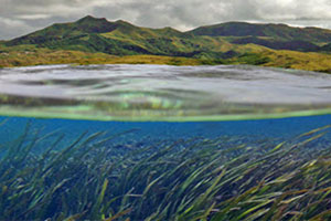 Habitat Focus Area thumbnail image