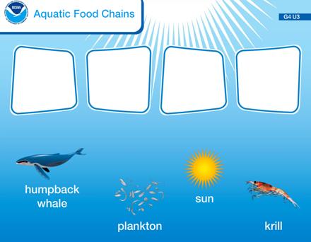 Aquatic Food Chains | Sea Earth Atmosphere