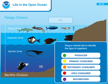 Life in the Open Ocean | Sea Earth Atmosphere