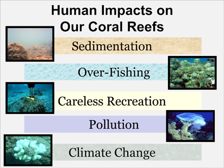 Human Impacts on Our Coral Reefs | Sea Earth Atmosphere