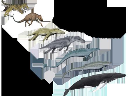 whale evolution sea earth atmosphere