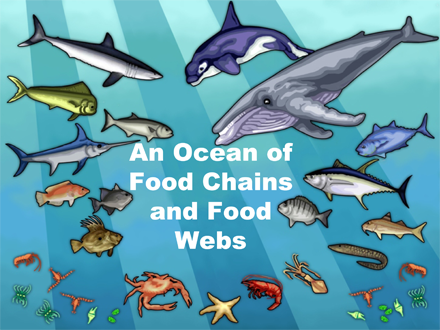 An Ocean of Food Chains and Food Webs | Sea Earth Atmosphere